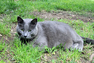 black cat sitted on grass