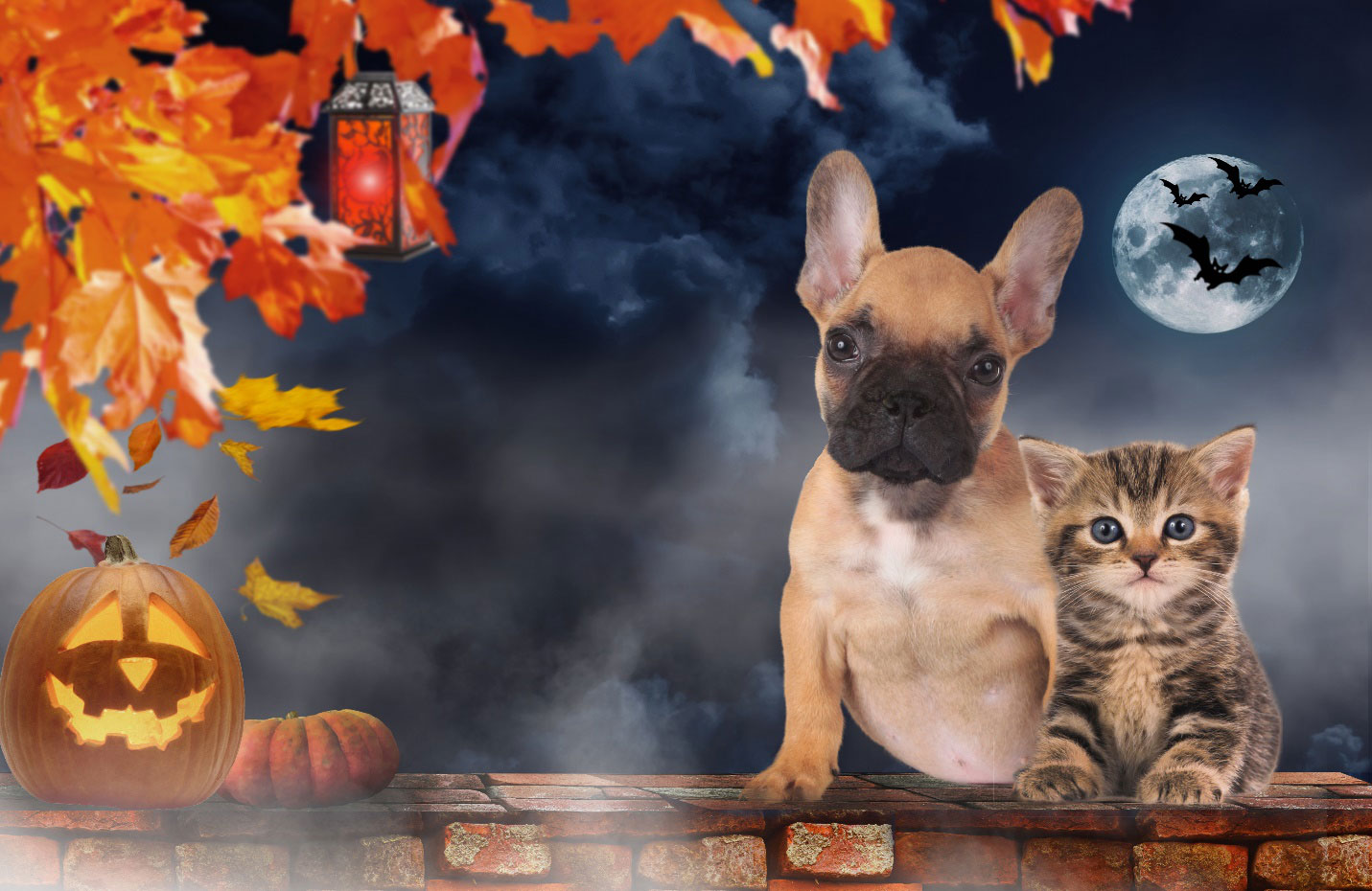 A group of pets on halloween