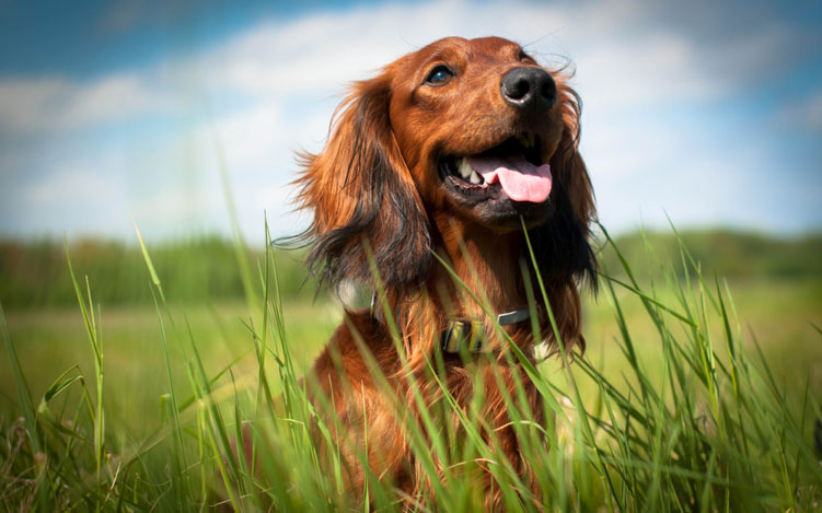 Dog on grass with blured background