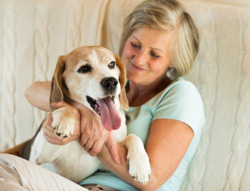 Reunited and It Feels So Good: How Microchipping Can Bring Your Pet Home