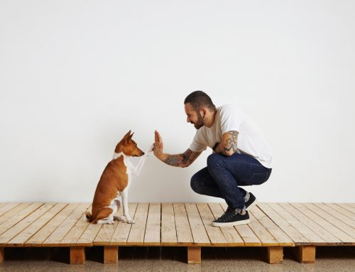 The Power of Positive Training in Pets