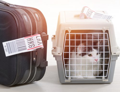 Considerations for Traveling with Pets
