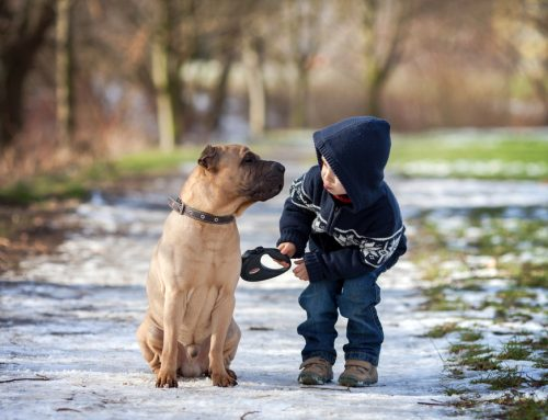 Top 10 Tips for Keeping Your Pet Safe in Cold Weather