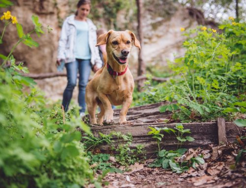 Fighting Fleas and Ticks: How to Keep Your Pet Safe this Spring