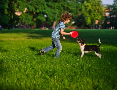 Kids and Pets: Keeping a Household Happy