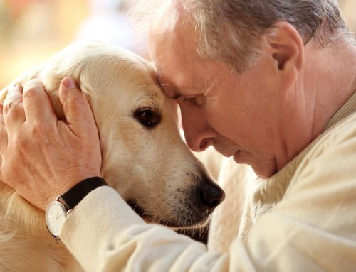 Is Hospice Care Right for You and Your Pet?