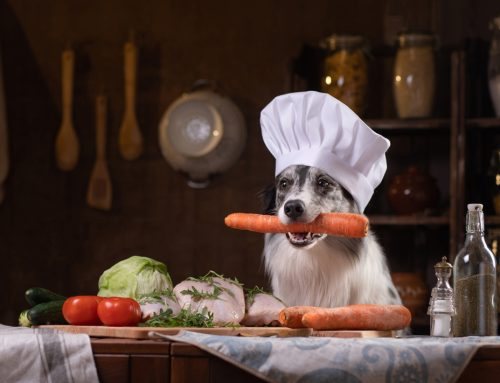 3 Tips to Ensure Your Pet's Nutrition is on the Right Track