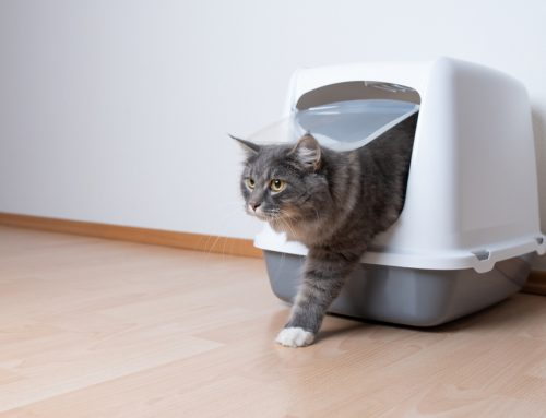 7 Steps to Resolve Litter Box Woes